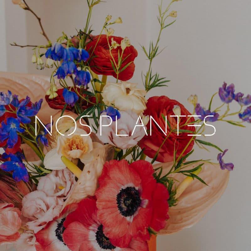 plantes-toulouse