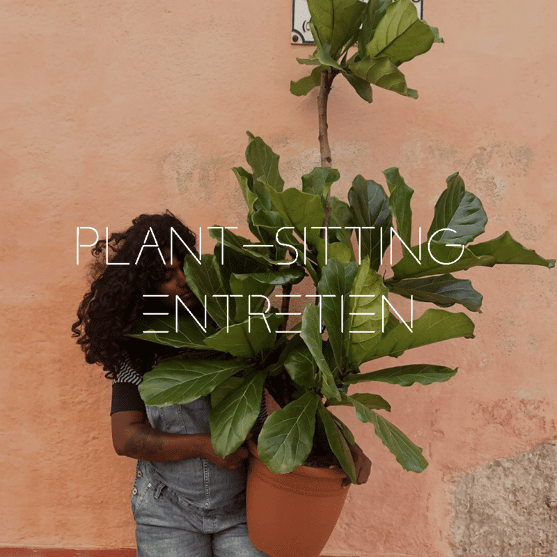 PLANT-SITTING-TOULOUSE